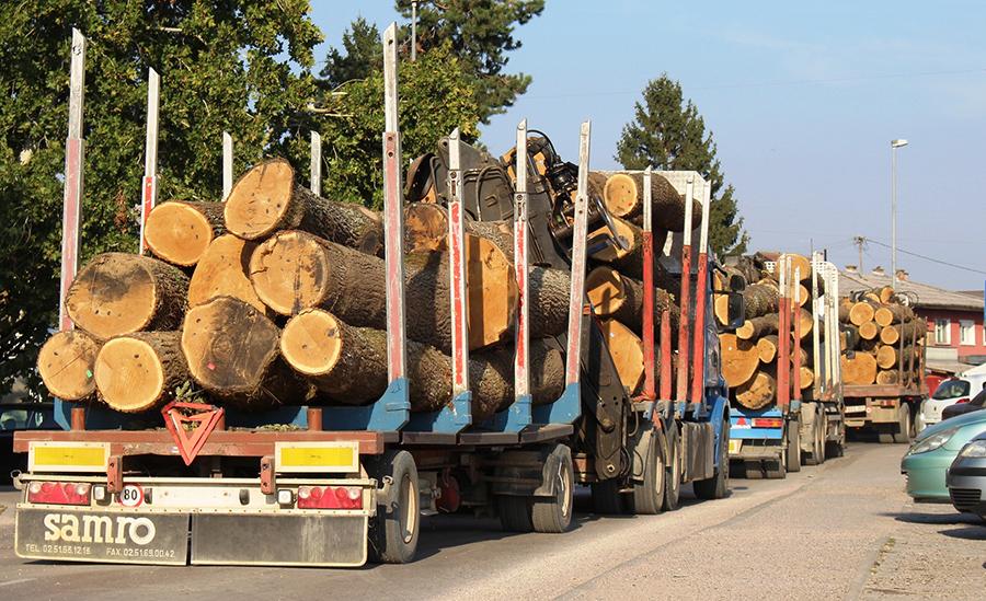 MUP SBK: Nelegalno prevozili drva pa pokušali podmititi policajce